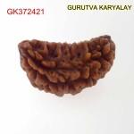 26.51 MM Ek Mukhi Rudraksha