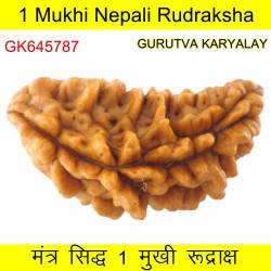 35.47 MM Ek Mukhi Rudraksha