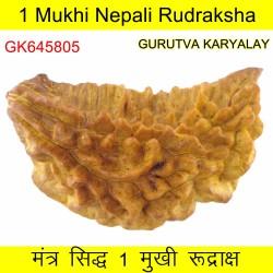 35.74 MM Ek Mukhi Rudraksha