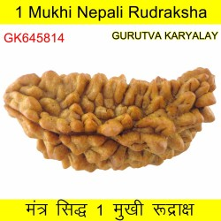36.01 MM Ek Mukhi Rudraksha