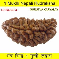36.64 MM Ek Mukhi Rudraksha