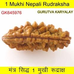 35.83 MM Ek Mukhi Rudraksha