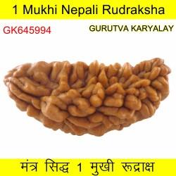 36.28 MM Ek Mukhi Rudraksha