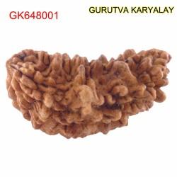 37.40 MM Ek Mukhi Rudraksha
