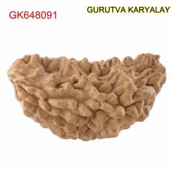 35.87 MM Ek Mukhi Rudraksha