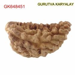 36.51 MM Ek Mukhi Rudraksha