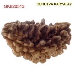 38.55 MM Ek Mukhi Rudraksha