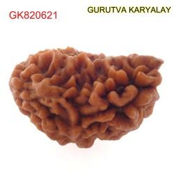 32.32 MM Ek Mukhi Rudraksha