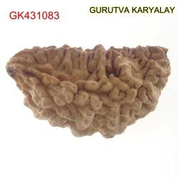 36.14 MM Ek Mukhi Rudraksha