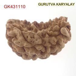 36.46 MM Ek Mukhi Rudraksha