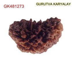 33.06 MM Ek Mukhi Rudraksha