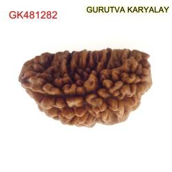 33.19 MM Ek Mukhi Rudraksha