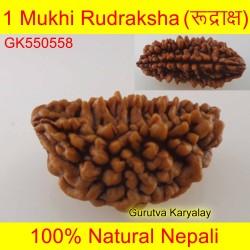 29.26 MM 1 Mukhi Rudraksh One Face Rudraksh