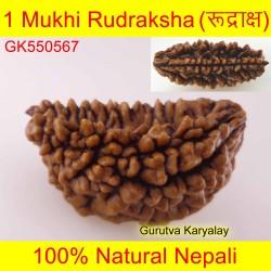 29.17 MM 1 Mukhi Rudraksh One Face Rudraksh