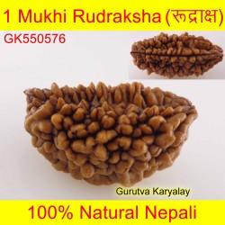 28.72 MM 1 Mukhi Rudraksh One Face Rudraksh