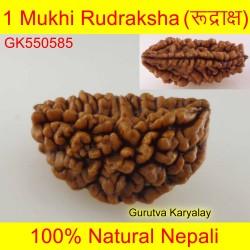 28.63 MM 1 Mukhi Rudraksh One Face Rudraksh