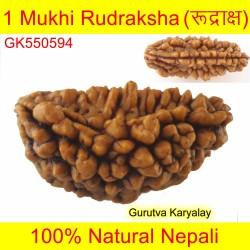 28.36 MM 1 Mukhi Rudraksh One Face Rudraksh