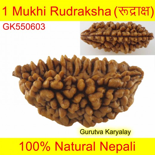 30.76 MM 1 Mukhi Rudraksh One Face Rudraksh