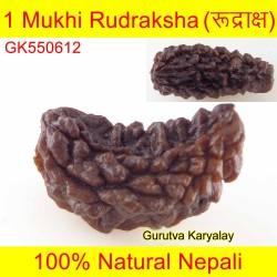 26.47 MM 1 Mukhi Rudraksh One Face Rudraksh