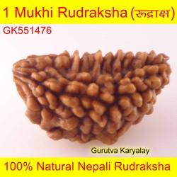 30.61 MM 1 Mukhi Rudraksh One Face Rudraksh