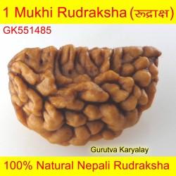 28.90 MM 1 Mukhi Rudraksh One Face Rudraksh