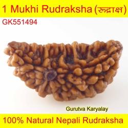 35.02 MM 1 Mukhi Rudraksh One Face Rudraksh