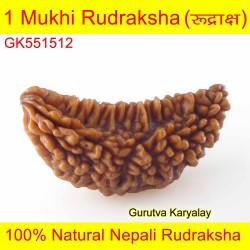 37.09 MM 1 Mukhi Rudraksh One Face Rudraksh