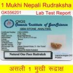 33.73 MM Ek Mukhi Rudraksha