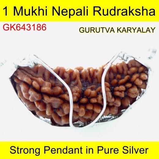 36.46 MM 1 Mukhi Rudraksha In Silver Pendant