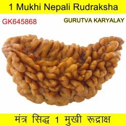 37.36 MM 1 Mukhi Rudraksh One Face Rudraksh