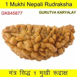 38.71 MM 1 Mukhi Rudraksh One Face Rudraksh