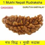 36.46 MM 1 Mukhi Rudraksh One Face Rudraksh