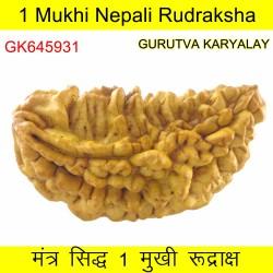 38.26 MM 1 Mukhi Rudraksh One Face Rudraksh