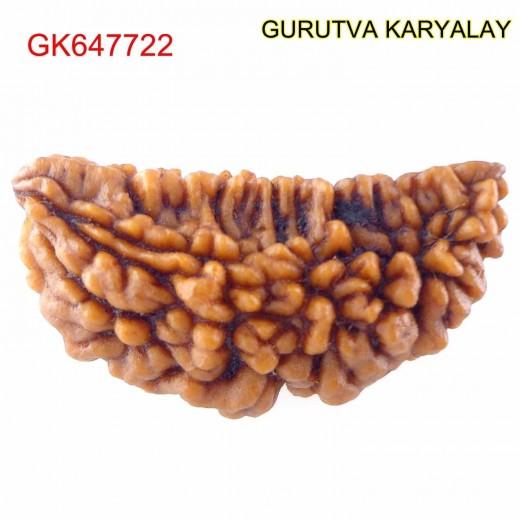 31.92 MM Ek Mukhi Rudraksha