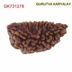 28.72 MM Ek Mukhi Rudraksha