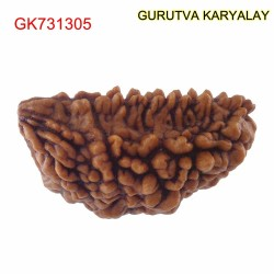 29.40 MM Ek Mukhi Rudraksha