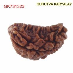 29.70 MM Ek Mukhi Rudraksha