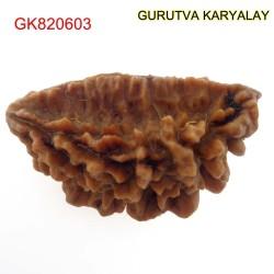 37.22 MM Ek Mukhi Rudraksha