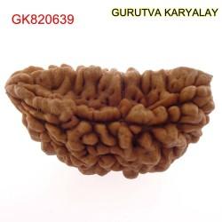 33.33 MM Ek Mukhi Rudraksha