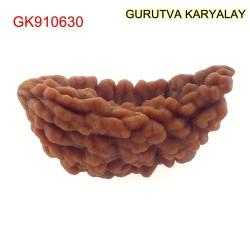 29.98 MM Ek Mukhi Rudraksha