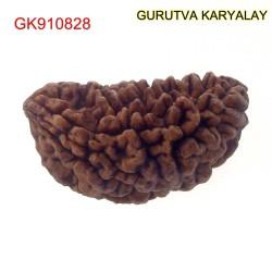 32.22 MM Ek Mukhi Rudraksha