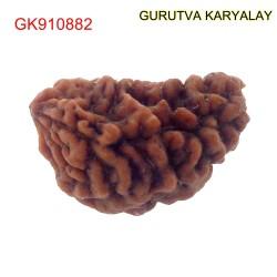 28.18 MM Ek Mukhi Rudraksha