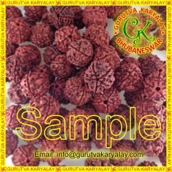 1 Kg Natural Panch Mukhi Nepali Rudraksha Seller Pack+