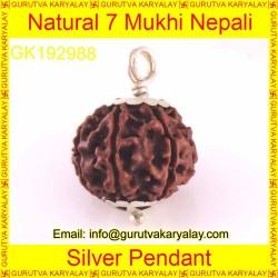 22-23 MM Mantra Siddha Natural 7 Mukhi Nepali Rudraksha