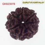 21.74 MM Mantra Siddha Natural 7 Mukhi Nepali Rudraksha