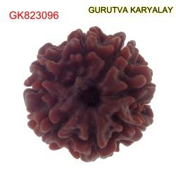 21.34 MM Mantra Siddha Natural 7 Mukhi Nepali Rudraksha