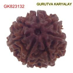 20.53 MM Mantra Siddha Natural 7 Mukhi Nepali Rudraksha
