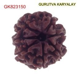 21.79 MM Mantra Siddha Natural 7 Mukhi Nepali Rudraksha