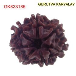 22.10 mm Mantra Siddha Natural 7 Mukhi Nepali Rudraksha