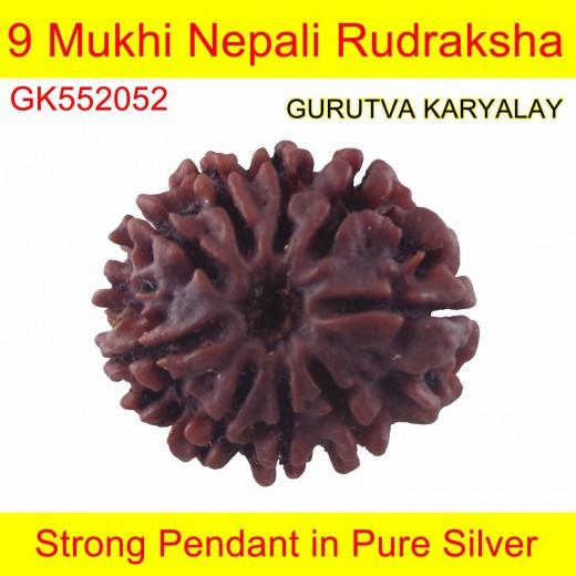 19.20 MM 9 Mukhi Nepali Rudraksha Mantra Siddha